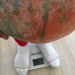 かぼちゃ重さ3